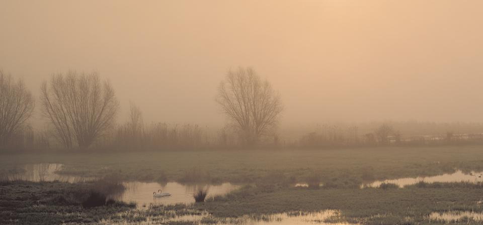 Battlefields_Ypres_swans